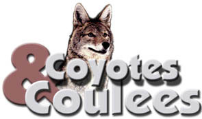 Coyotes and Coulees