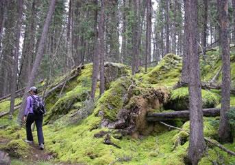 Boreal forest trail in northern Saskatchewan