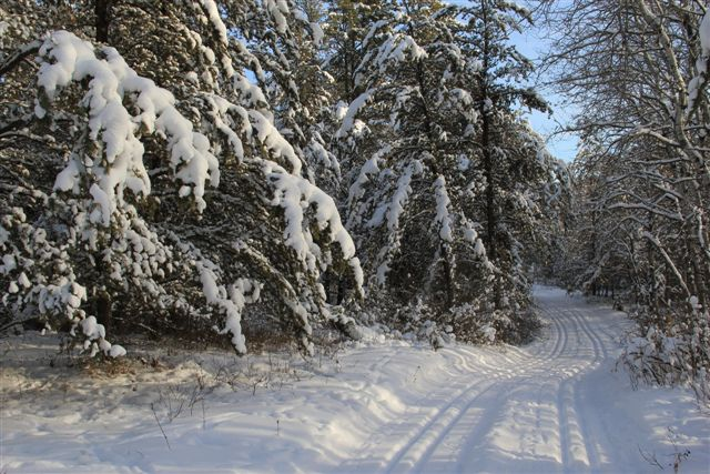 Boreal Forest Ski Trail - Grooming Makes a Big Difference!