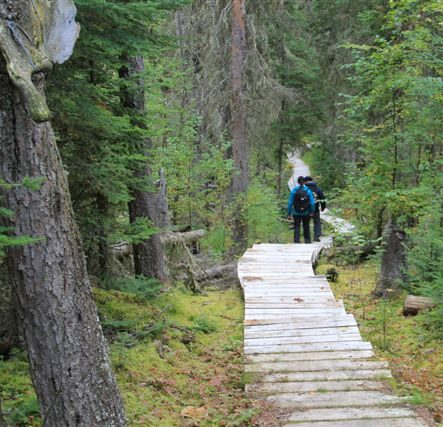 Trail to Grey Owls cabin